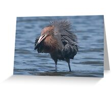 Now this is a bad feather day ! Greeting Card