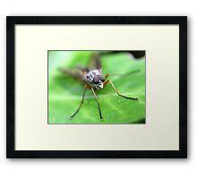 Fly On Ivy Leaf Framed Print