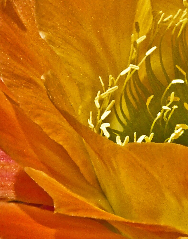 Cactus curves by Linda Sparks