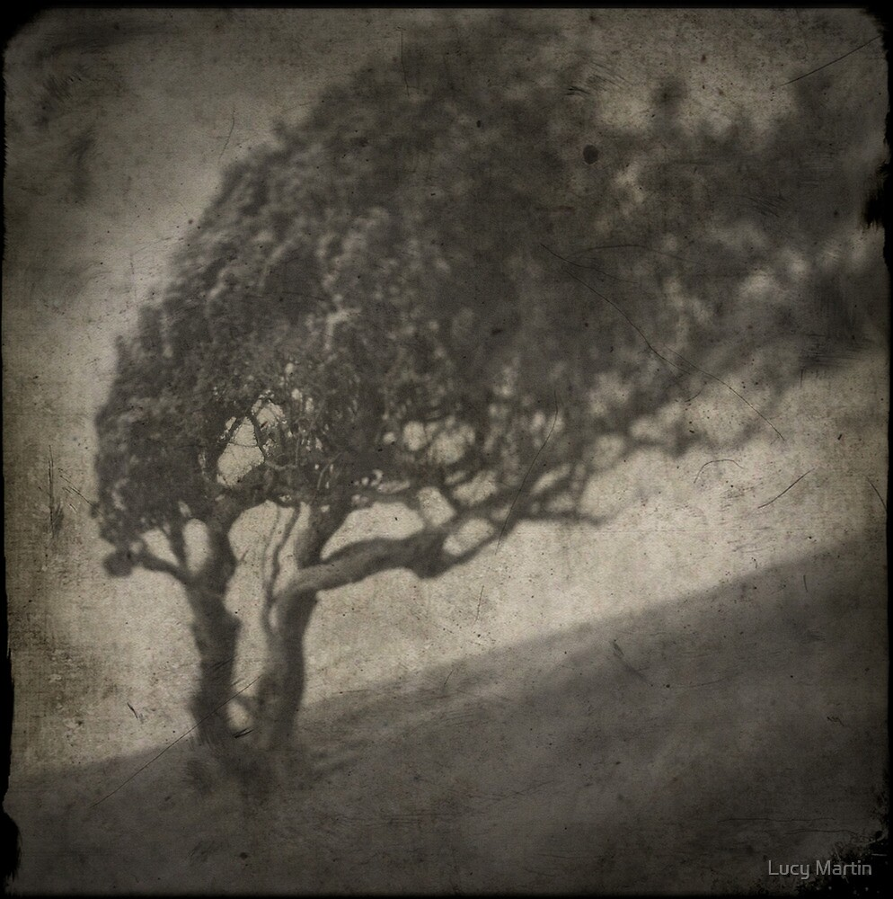 Tortured Tree by Lucy Martin