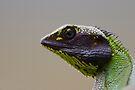Black-lipped Lizard by Neil Bygrave (NATURELENS)