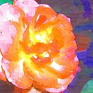 Abstract of full pink and peach rose by  B. Randi Bailey