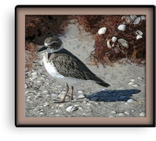 Shore Bird Canvas Print