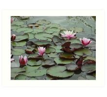 Down on the lily pad Art Print