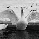 Winter Swan by OsirisPQ