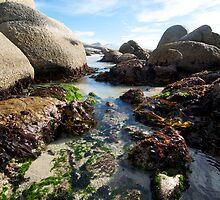 Boulders Beach Rock Pools by Neil  Bradfield