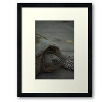 Snapping Turtle 2 Framed Print