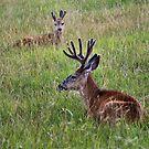 Resting deer by JamesA1