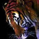 Grace of a Tiger by Dawn B Davies-McIninch