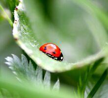 Simply a Ladybird by jennimarshall