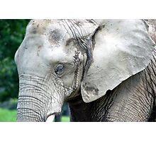 Elephants Wrinkled Skin Photographic Print
