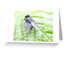 Fly on a leaf. Greeting Card