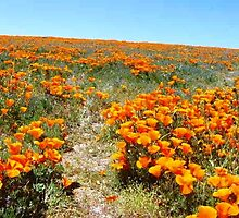Acres of Poppies by Randy Sprout