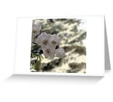 Lily Of The Valley Center Greeting Card