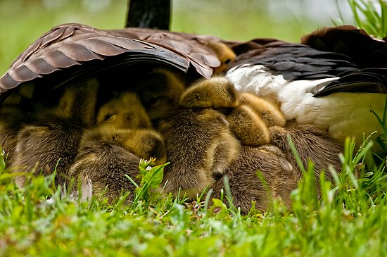 Nappy Time 2 - Ottawa, Ontario by Michael Cummings