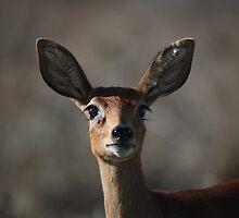 Morning Buck - Langebaan by Nick Bradshaw