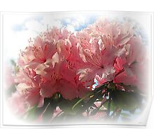 ~ Rhododendron ~ Poster