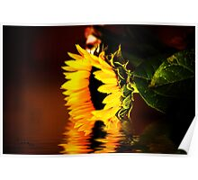 Sunflower Bathing Poster