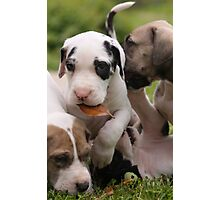 A pile of puppies Photographic Print