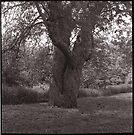 Tree Couple Dancing by Barbara Wyeth