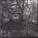 Along Black Hawk Creek by Barbara Wyeth