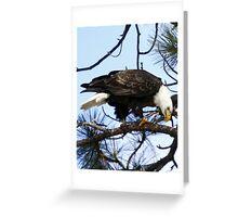 Bald Eagle on Sweathouse Creek Greeting Card