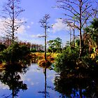 Florida's Own Reflection by Michael Damanski