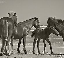 Wild Horses of Corolla by Rob Diffenderfer