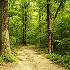 Path in the Park by Susan Blevins