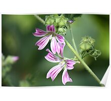 Purple flower 1346 Poster