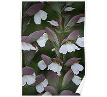 White flower 1558 Poster