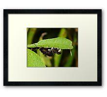 Mystery Bee Framed Print