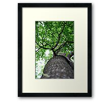 Squirrels Point of View Framed Print