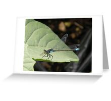 Insect Control Greeting Card