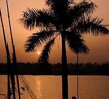 coconut tree by Zoltan