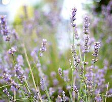 Lavender by Ashley Baxter