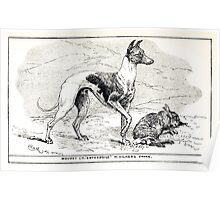 All about dogs a book for doggy people Charles Henry Lane 1900 0141 Whippet_jpg Poster