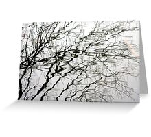 Water Branches Greeting Card