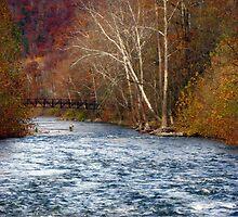 Gone Fishing  by Shelby  Stalnaker Bortone