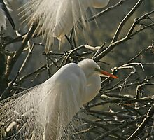 Double Egret by Jeff Holcombe