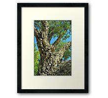 Cork Tree Framed Print