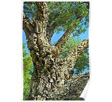 Cork Tree Poster