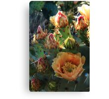 From bloom to fruit. Canvas Print