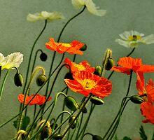 California Poppies  by LudaNayvelt