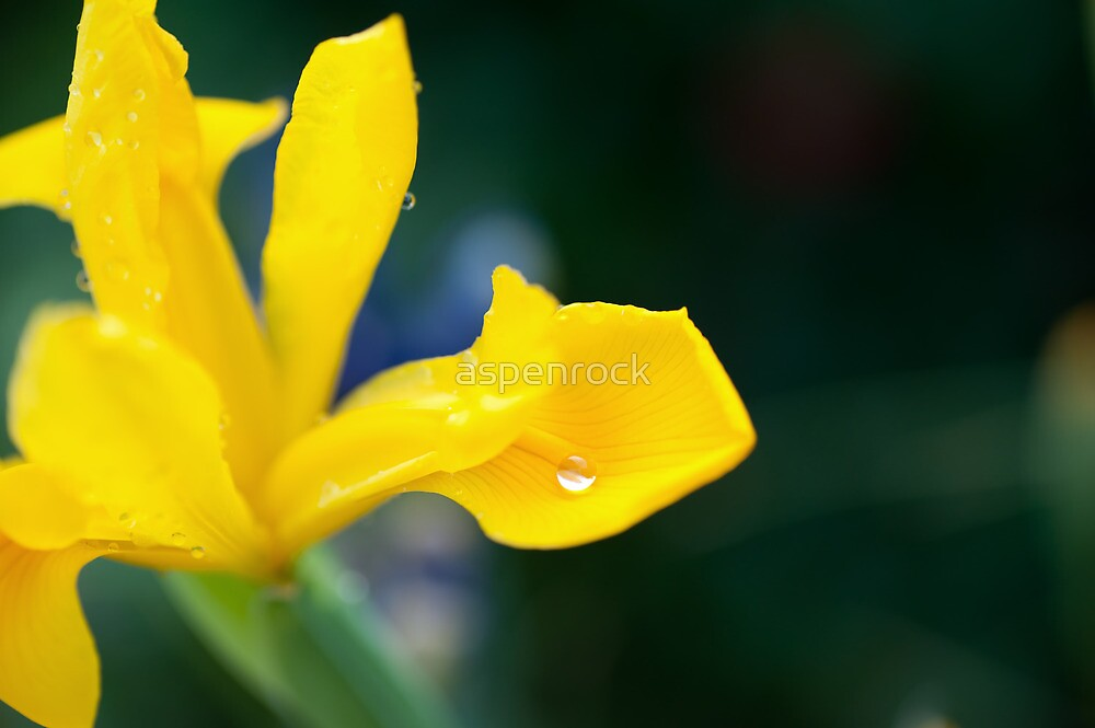 shallow depth of focus on a silvery water drop by aspenrock