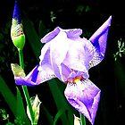 Iris by Blackpig