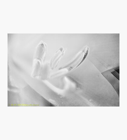 Ghost Flower. Photographic Print