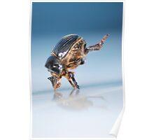 Break Dancin' Beetle Poster