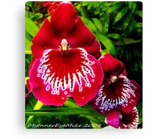#295          Red & White Orchid Canvas Print