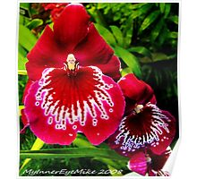 #295          Red & White Orchid Poster